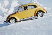 Ein Käfer auf Extratour