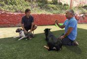 Notruf Hund - Einsatz für Cesar - Albtraum mit Nani