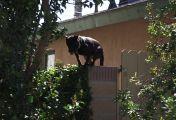 Notruf Hund - Einsatz für Cesar - Auf der Flucht