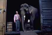 Die dicke Vera - Ein Elefant zum Knutschen