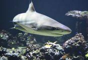Joan of Shark - Die Mutter der Weißen Haie