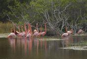 Wilde Inseln: Galapagos