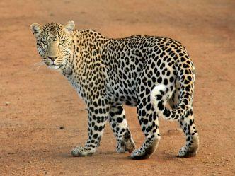 Wild Frank - Abenteuer in Afrika - Auf Tuchfühlung